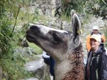Camera friendly Llama!
